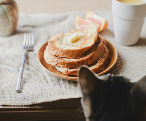 cat, food, and breakfast image