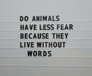 abuse, mean, and animal rights image
