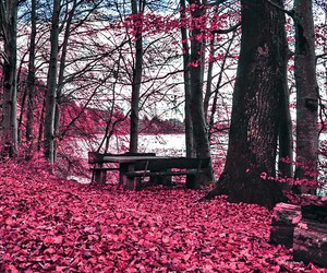 autumn, beautiful, and bench image