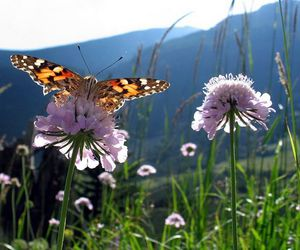 beautiful, butterflies, and dreamy image
