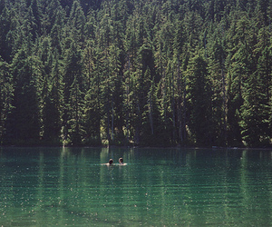 lake, nature, and forest image