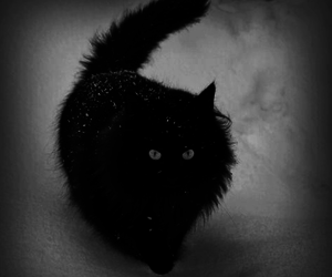 black, black and white, and cat image