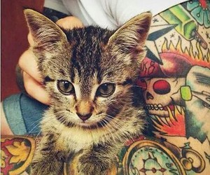 cat, miaw, and tattoo image