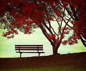 beautiful, fall, and landscape image