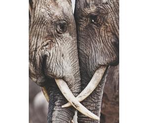 cute, love, and elephant image