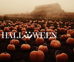 dark, Halloween, and pumpkins image