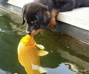 dog, fish, and kiss image
