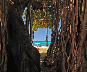 tree, ocean, and roots image
