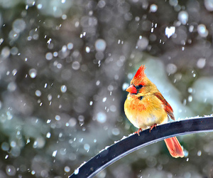 bird and snow image