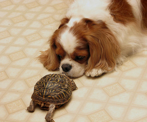 animal, turtle, and tortle image