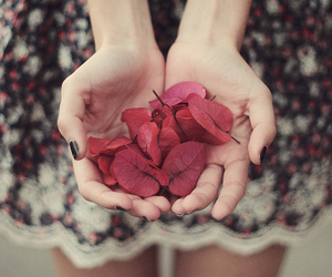 flowers, hands, and leaves image