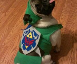 dog, cosplay, and Legend of Zelda image