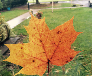 autumn, indie, and beautiful image