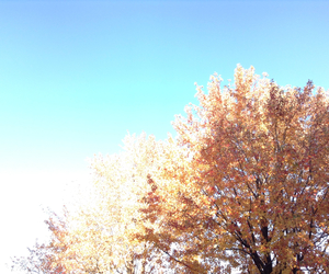autumn, sky, and photo image