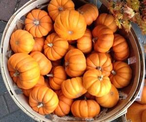 autumn, crisp, and orange image