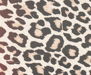 animal print, dull, and header image