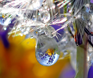 dandelion, nature, and flower image