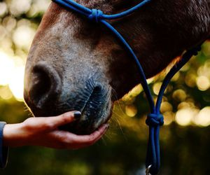 bokeh, horse, and photography image
