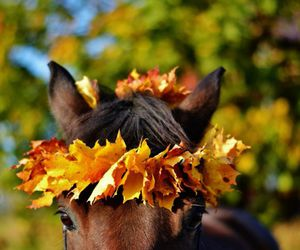 autumn, fall, and horse image