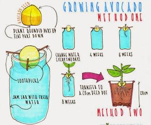 avocado, earth, and fruit image