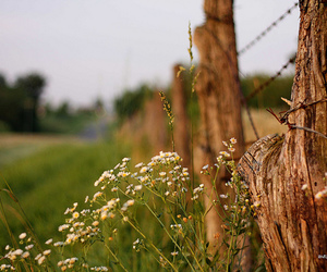 365, beautiful, and fence image
