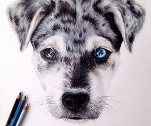 animal, art, and dibujo image