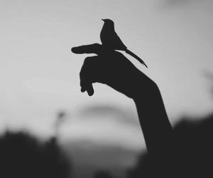 bird, hand, and nature image