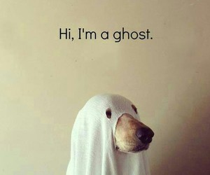 dog, funny, and ghost image