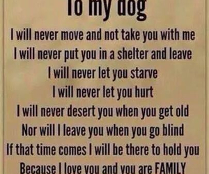 dog, promise, and i miss you image