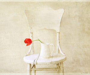 chair, photography, and spring image