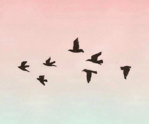 birds, wallpaper, and pink image