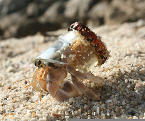 animal, crab, and hermit crab image