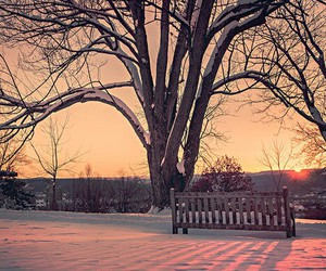 tree, winter, and bench image