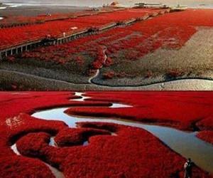red, china, and nature image