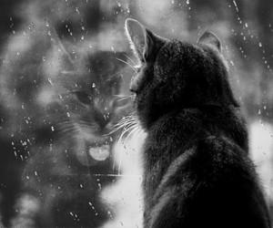 cat, rain, and black and white image