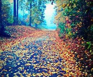 autumn, colorful, and Dream image