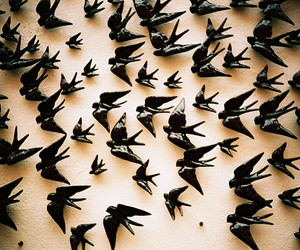 birds and swallow image