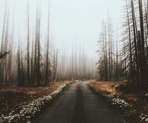 road, nature, and autumn image