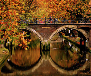 bridge, autumn, and fall image