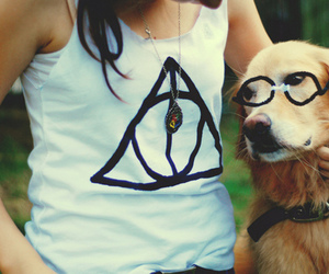 dog, harry potter, and deathly hallows image