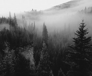 forest, nature, and cool image