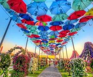 umbrella, Dubai, and flowers image