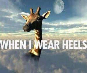 heels, funny, and giraffe image