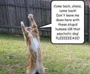 aliens, cat, and drama image