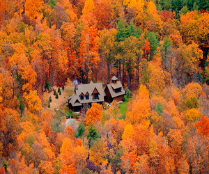 autumn, tree, and trees image