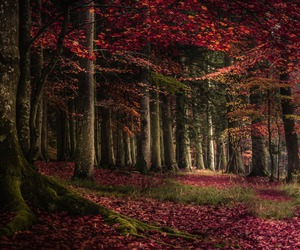 autumn, dreams, and wooden image