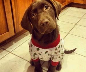 brown, christmas, and dog image