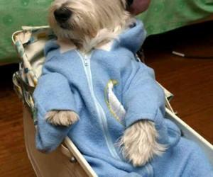 dog, pajamas, and sleeping image