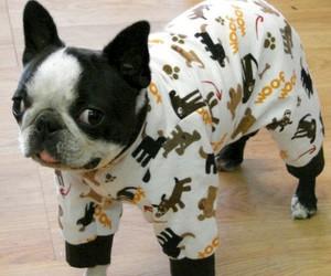 dog, pajamas, and cute image