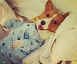 bedtime, pajamas, and dog image